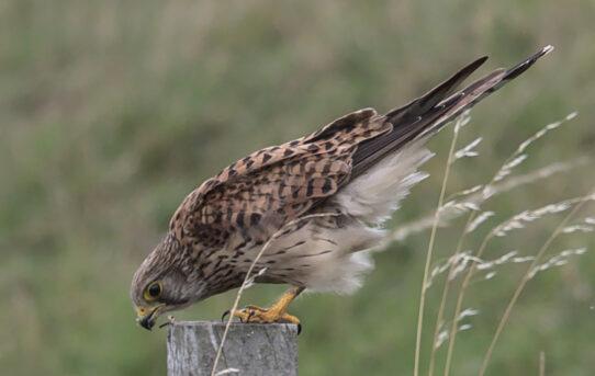 Rückblick: Ein gutes Jahr Vogelfotografie
